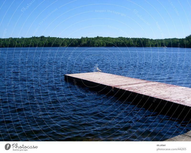 Steg ins Wasser #1 Wasser Himmel blau Erholung Horizont Steg Kanada
