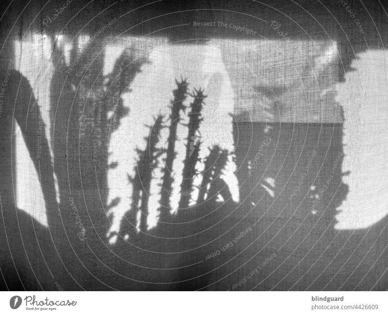 Shadows on the curtain Gardine Vorhang Schatten Kaktus Pflanze Gewebe Stoff Licht Menschenleer Innenaufnahme Falte Faltenwurf Textilien Fenster Gedeckte Farben