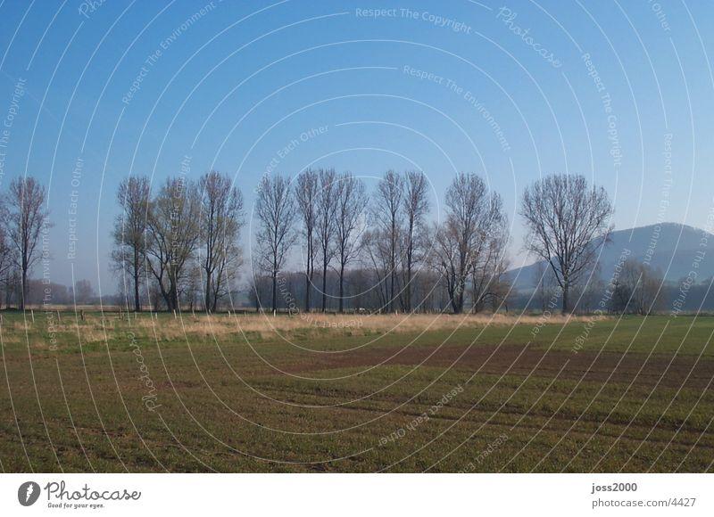 Baumgruppe 1 Landschaft Wäldchen