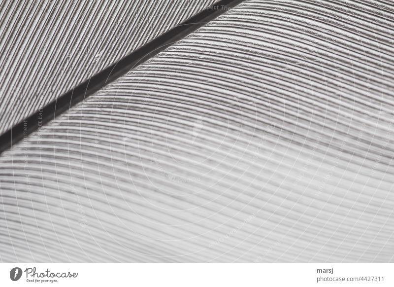 Federdetail. Feinst verzahntes Wunderwerk mit Kiel Kunstwerk ästhetisch natürlich elegant Makroaufnahme Vogelfeder Strukturen & Formen Kontrast fantastisch