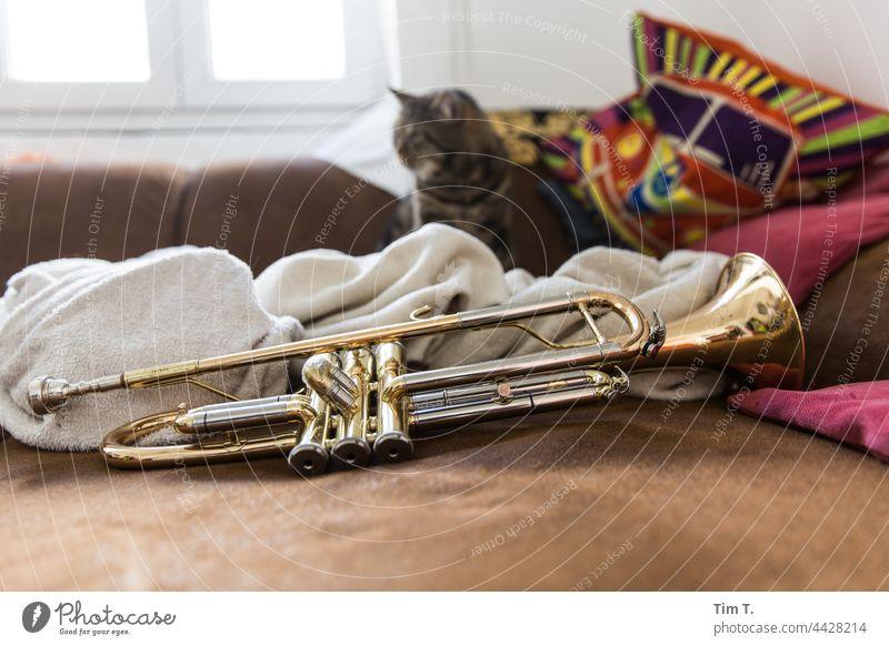 eine Trompete und im Hintergrund ein Kater Katze Musik Musikinstrument Farbfoto Innenaufnahme Menschenleer Blechblasinstrumente Detailaufnahme zuhause Couch