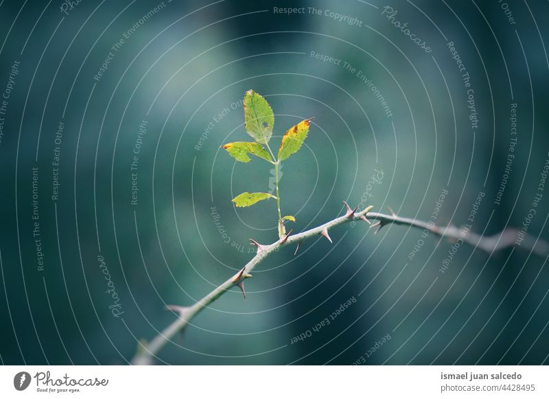 Baumzweig und grüne Blätter Niederlassungen Blatt Natur natürlich Laubwerk texturiert Hintergrund Schönheit Zerbrechlichkeit Frische Frühling Saison