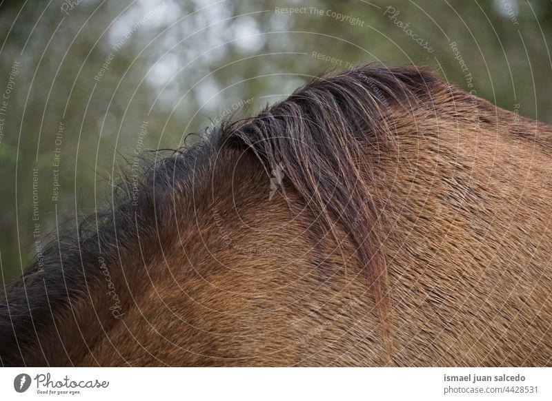 braunes Rosshaar Pferd Porträt Tier wild Kopf Auge Ohren Behaarung Natur niedlich Schönheit elegant wildes Leben Tierwelt ländlich Wiese Bauernhof Weidenutzung