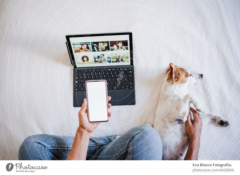 frau bei videogespräch mit freunden auf laptop. niedlicher kleiner jack russell hund daneben liegend. mit handy. technik und home office unkenntlich Frau