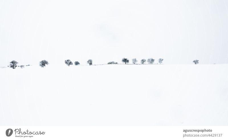 Schneelandschaft. Reihe von Bäumen am Horizont nach einem Wintersturm. copy space. Winter-Konzept Landschaft Textfreiraum Linie Unwetter Baum verschneite