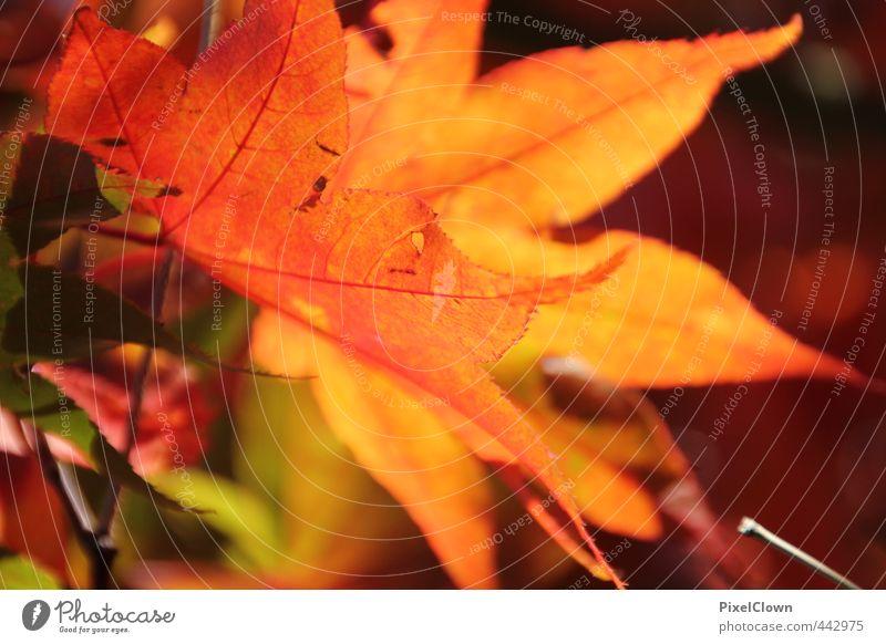 Herbstimpressionen Natur Tier Pflanze Baum Blatt Garten Park Wald Wege & Pfade träumen mehrfarbig gelb orange rot Romantik Farbe Farbfoto Makroaufnahme