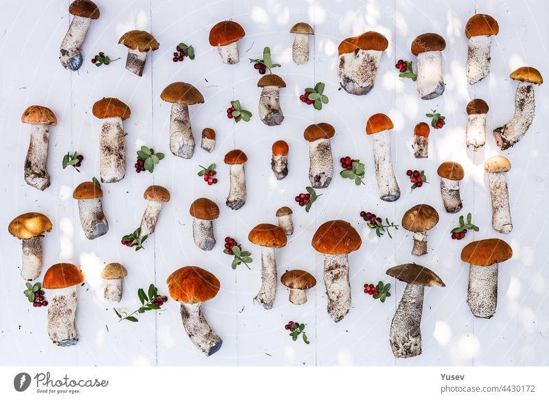 Herbstlicher Hintergrund. Orange Kappe Steinpilze und reife Preiselbeeren auf einem weißen Holzhintergrund. Sammeln von wilden Pilzen in den Wald Muster. Herbsternte von essbaren Waldpilzen und Beeren