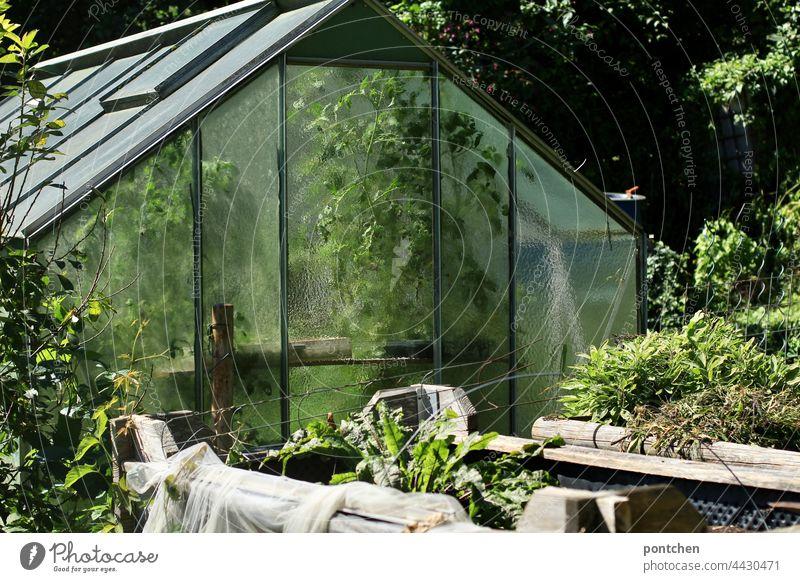 ein Gewächshaus voller grüner Pflanzen. Gemüseanbau, Kleingärtner gewächshaus garten kleingärtner gemüse stauden pflanzen schrebergarten glas natur Bioprodukte
