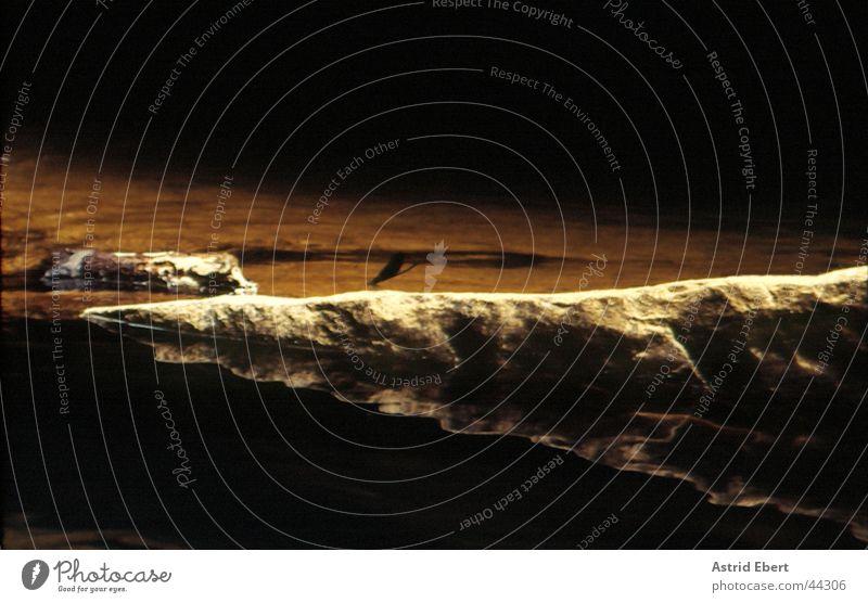 Libelle am Fluss Insekt Schmetterling Licht braun Reflexion & Spiegelung dunkel Verkehr Fliege Wasser Stein Schatten Abend