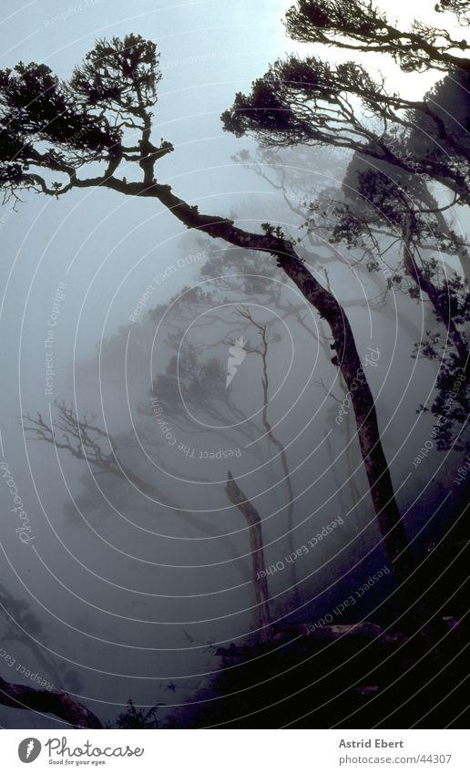 Nebel des Grauens Baum Wald Berge u. Gebirge grau gruselig Urwald unheimlich Sri Lanka