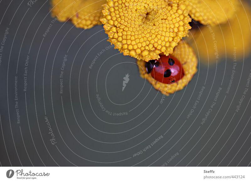 Happy Birthday Photocase Valentinstag Natur Pflanze Tier Sommer Blume Käfer Marienkäfer krabbeln Glück natürlich schön gelb Lebensfreude Wunsch Geburtstag