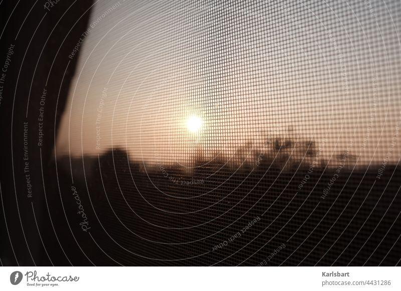 Fliegengitter im Sonnenuntergang Mückenplage Mückenschutz Stechmücke Schnake Vorsorge Sommer Farbfoto Natur Detailaufnahme Umwelt Insekt Menschenleer Fenster