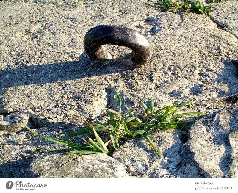 Stahlring mit Grün Natur grün Gras Stein Beton Kreis Stahl Eisen labil Metallring