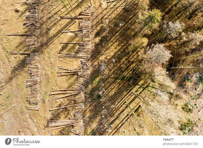 Gefällter Wald. wald gefällt gefällter wald bäume borkenkäfer klimawandel aus der luft luftaufnahme heiß natur sonne schatten