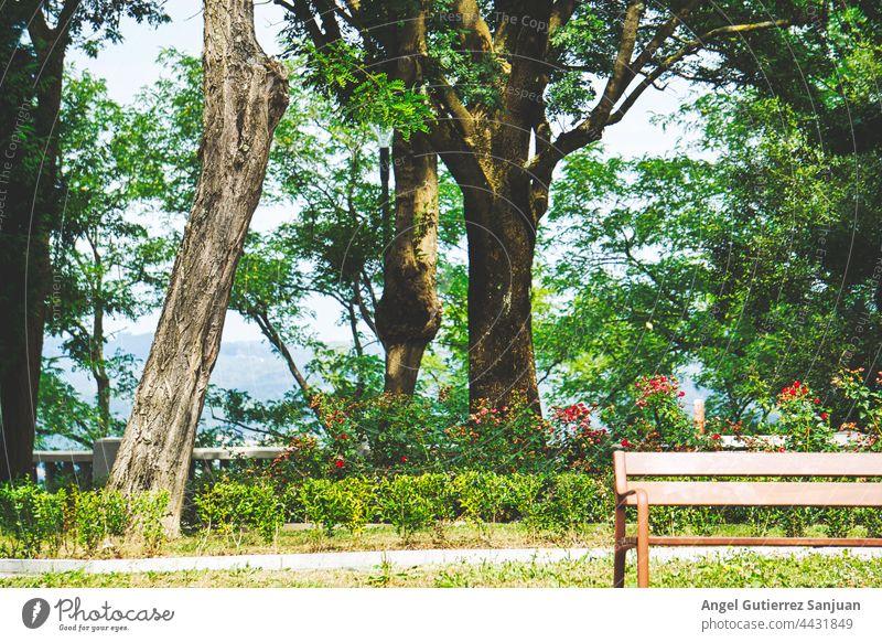 Sitzbank zum Sitzen, wenn Sie müde sind, in der Mitte der Bäume Bank grün Parkbank Erholung Baum Holzbank Pause Garten Windstille Sitzgelegenheit sitzen Natur