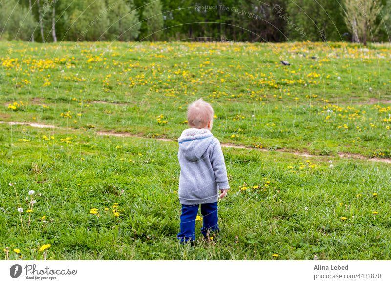 Ein fröhliches Kind geht auf einem Feld mit Löwenzahn spazieren. Junge Kleinkind Gesundheit Kaukasier Baby schön Kindheit niedlich Spaß Gras grün Fröhlichkeit