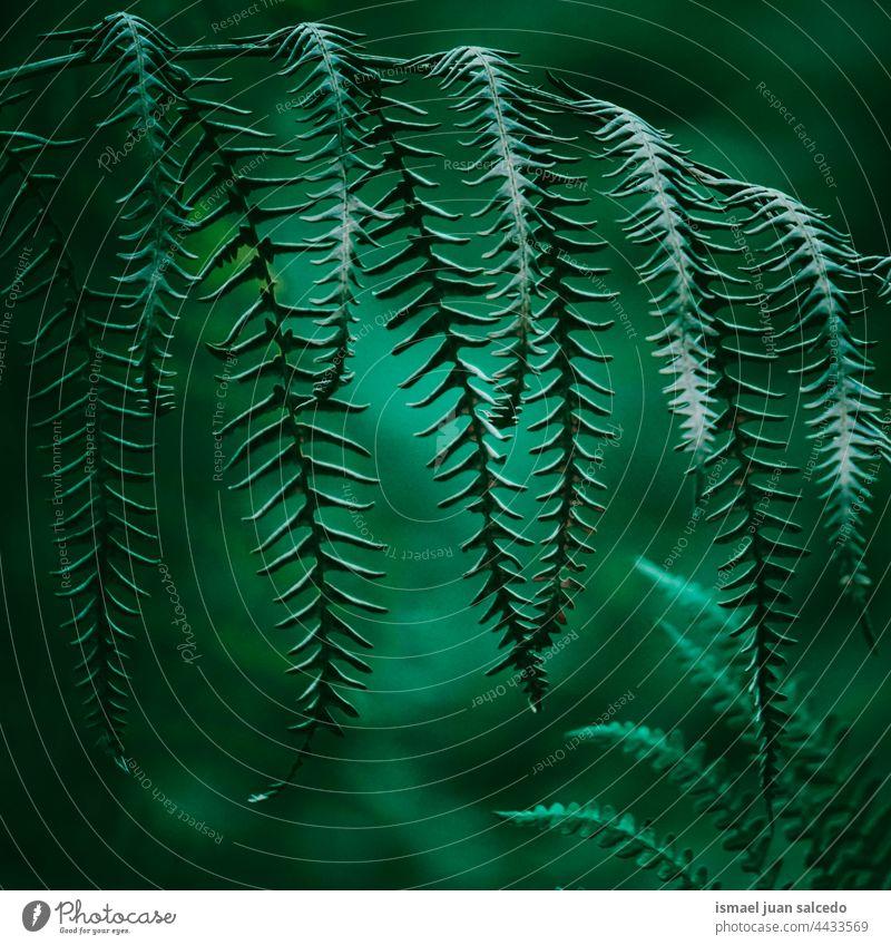 grüne Farnblätter im Frühling Wurmfarn Pflanze Blatt Blätter abstrakt Textur texturiert Garten geblümt Natur dekorativ im Freien Zerbrechlichkeit Hintergrund