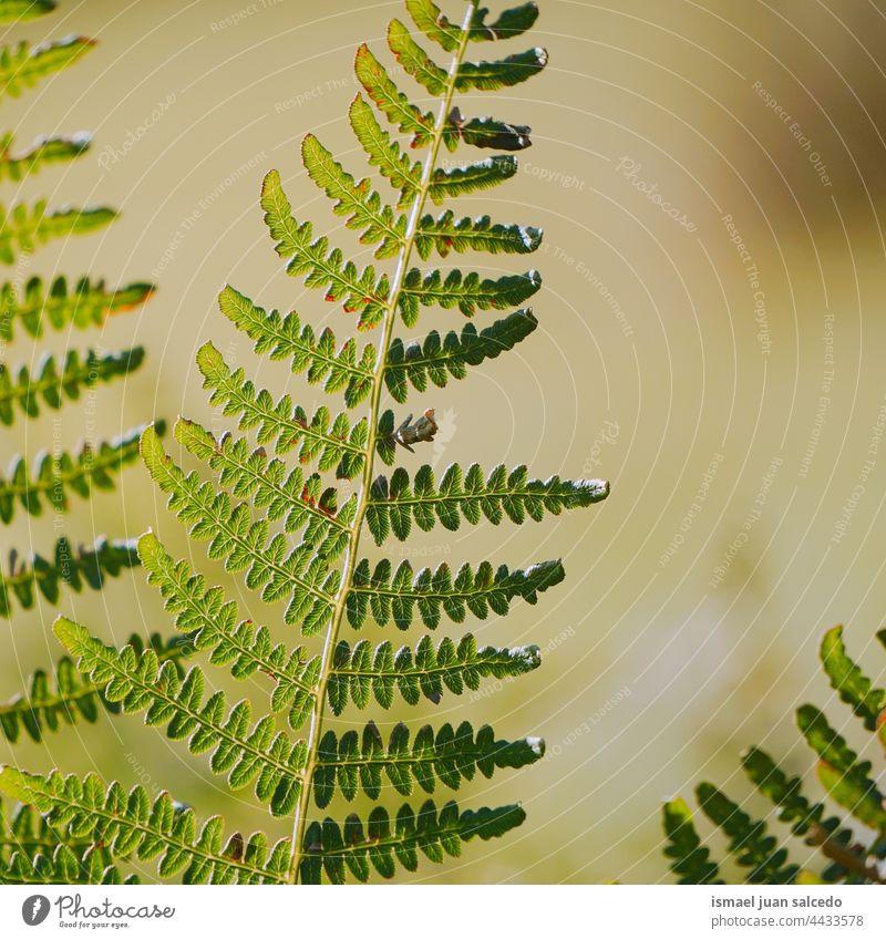 grünes Farnblatt im Frühling Wurmfarn Pflanze Blatt Blätter abstrakt Textur texturiert Garten geblümt Natur dekorativ im Freien Zerbrechlichkeit Hintergrund
