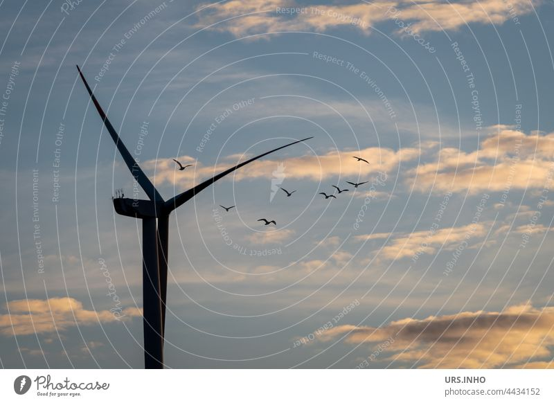 Die Vögel fliegen hoch oben bei wolkigem Himmel dicht am Rotor der Windkraftanlage vorbei Erneuerbare Energie Energiewirtschaft Elektrizität ökologisch