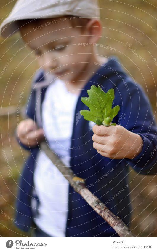 Der Herbst kommt Mensch Kind 1 3-8 Jahre Kindheit Blatt Wald niedlich Herbstlaub Eicheln Eichenblatt Sammlung Außenaufnahme Herbstwald Stock Ast Farbfoto