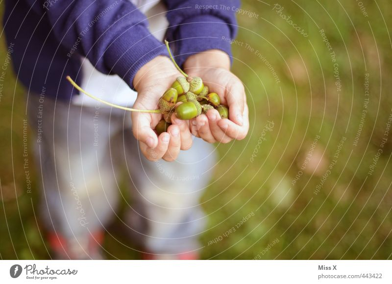 Viele Mensch Kind Hand Baum Wald Herbst Spielen Park Freizeit & Hobby Kindheit Schönes Wetter viele festhalten zeigen Kleinkind Sammlung