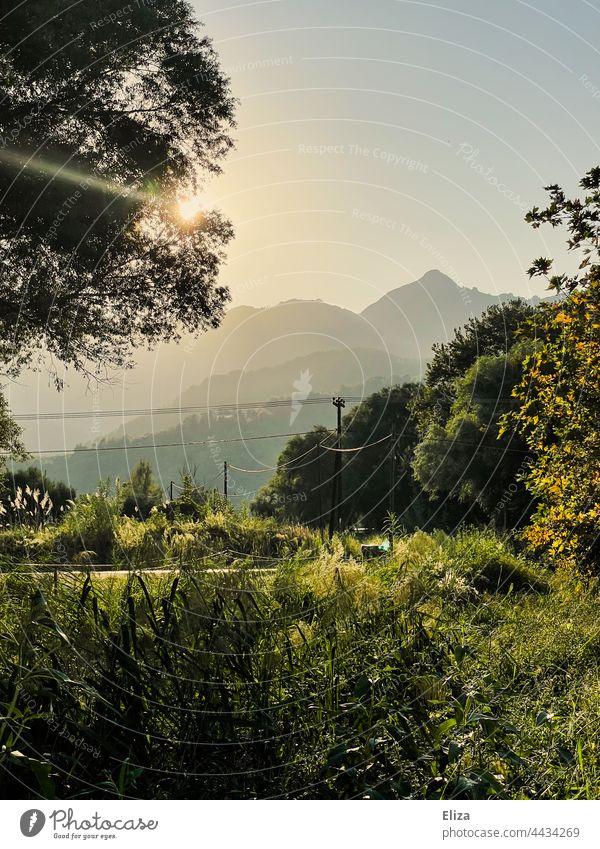 Landschaft, Wiese, Bäume und Berge in der Abendsonne Gegenlicht Sonnenlicht Natur Sonnenschein Idylle warm Sonnenstrahlen Schönes Wetter