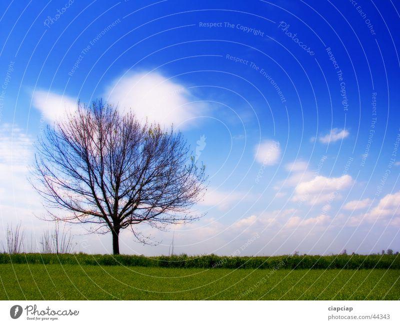Baum Himmel Wolken Gras Horizont