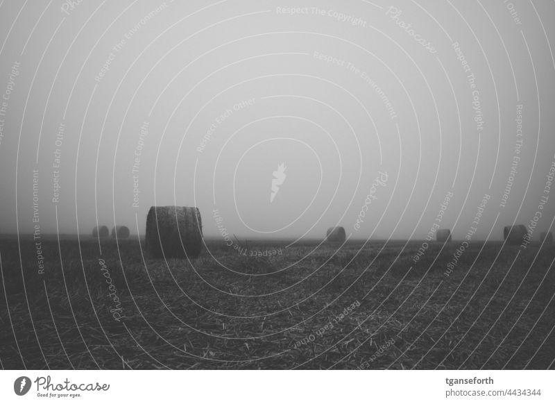 Rundballen Nebel Acker Stroh morgens Morgenstimmung Außenaufnahme ruhig Menschenleer Nebelstimmung neblig nebliger Morgen Morgennebel Umwelt