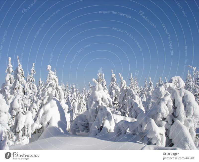 Winter silence Wald Schnee Berge u. Gebirge Erzgebirge