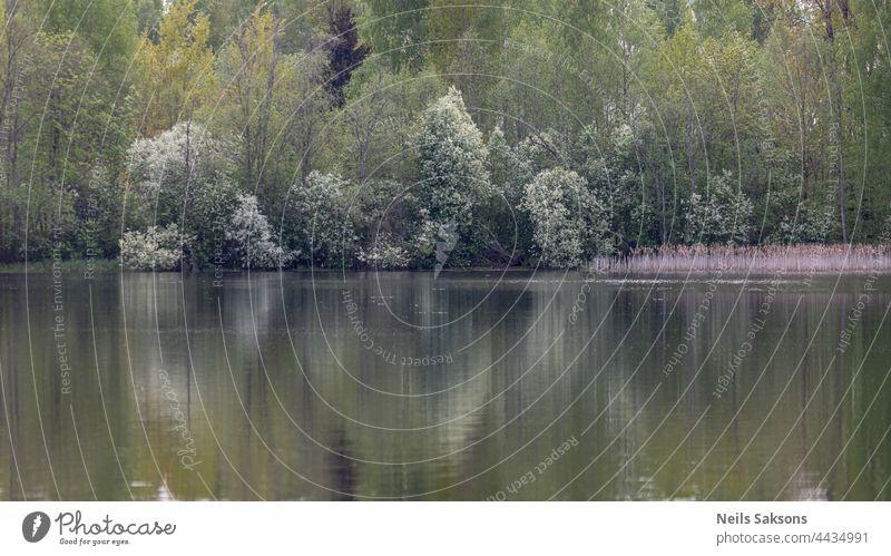 Frühling Wald Reflexion in ruhigen Teich oder See Wasser, April Abend schön dim blasses Licht, blühende weiße Vogel Kirschbäume Hintergrund Schönheit schwarz