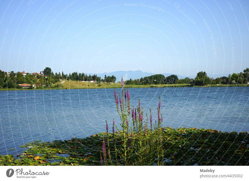 Biotop und Naturschutzgebiet im Sommer bei Sonnenschein am Poyrazlar Gölü bei Adapazari in der Provinz Sakarya in der Türkei See Gewässer Landschaft