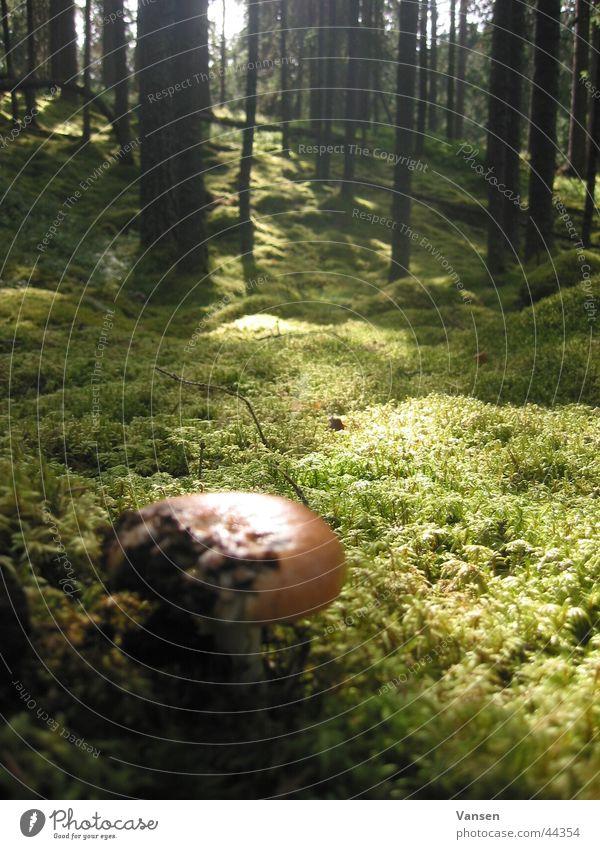 Wald Baum Pilz