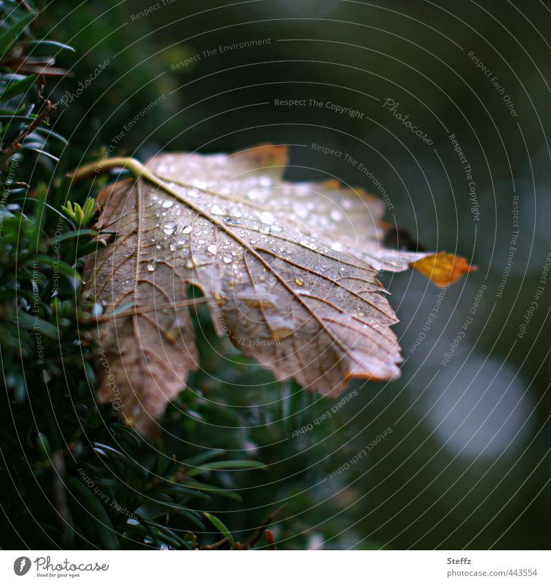 herbstliche Melancholie Natur Herbst Klima Klimawandel schlechtes Wetter Regen Pflanze Blatt Herbstlaub alt nass natürlich trist Traurigkeit Einsamkeit