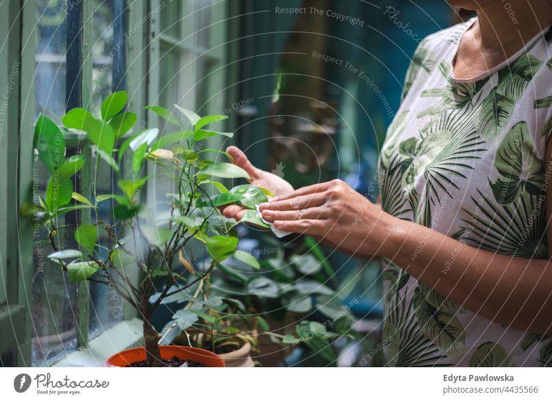 Frau wischt Staub von Pflanzenblättern Pflege Wischen Staubwischen aufpassend Hand Blume Garten Natur Gartenarbeit Blumen Baum Menschen Hände Blatt Schönheit