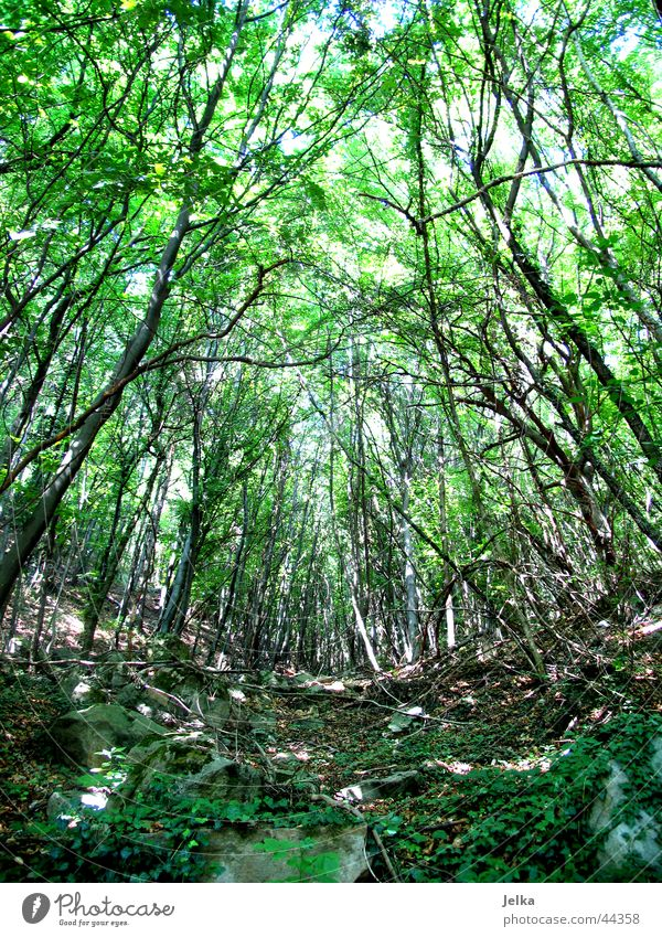 ein bäumlein steht im walde... Natur grün Baum Blatt Wald Waldboden