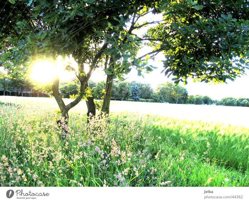 naturo puro Sonne Baum Gras ästhetisch Ast Hoffnung Baumstamm Glaube Zweig Optimismus Kornfeld Weizen Weizenfeld