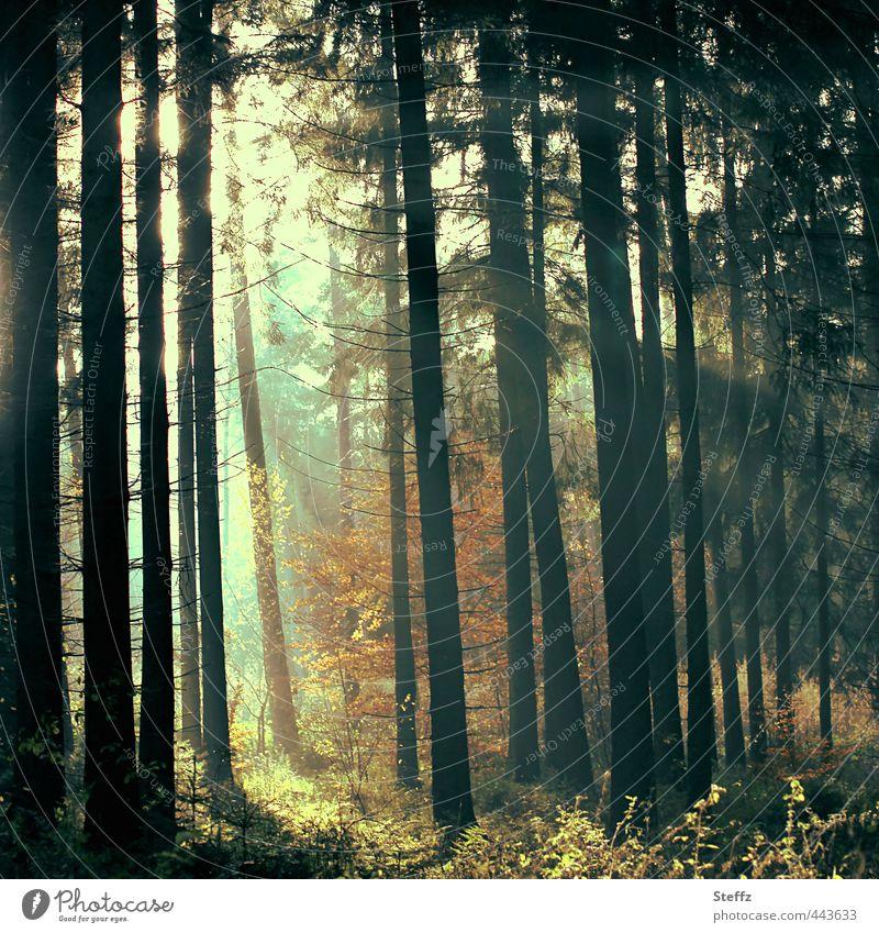 Waldstimmung Natur Farbe Sommer Baum Landschaft ruhig Herbst Stimmung Schönes Wetter Baumstamm Herbstlaub herbstlich Lichtschein Herbstfärbung Zweige u. Äste