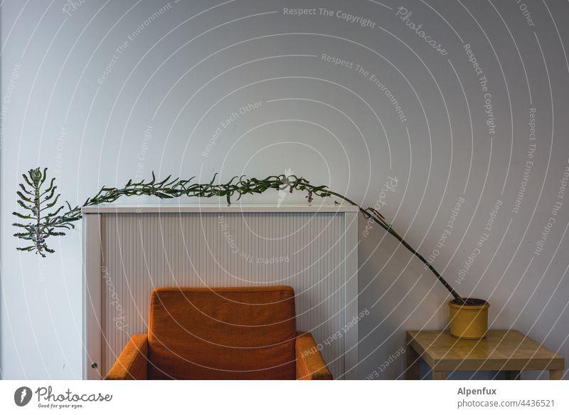 ...und alles strebt zum Licht Zimmerpflanze Sessel Häusliches Leben zum Licht wachsen Pflanze Dekoration & Verzierung Wohnung Fenster Menschenleer Fensterbrett