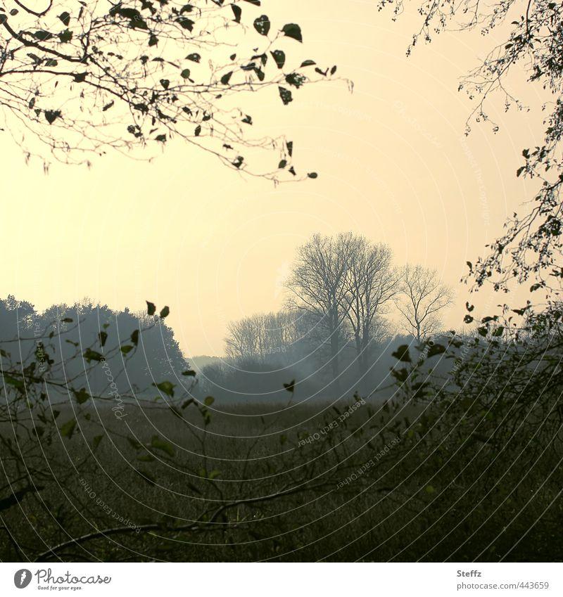 autumn day Natur Pflanze Baum Landschaft ruhig kalt Wald Traurigkeit Herbst Wetter trist Vergänglichkeit Wandel & Veränderung Romantik Jahreszeiten Herbstlaub