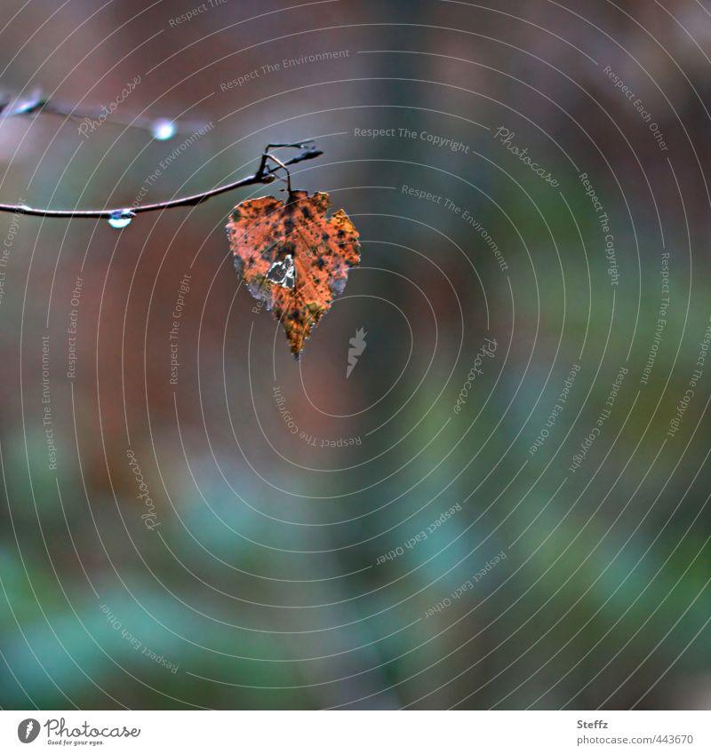 Autumn leaf Natur Pflanze Einsamkeit Blatt ruhig Wald Umwelt Traurigkeit Herbst Regen trist Vergänglichkeit Wandel & Veränderung Meditation Herbstlaub