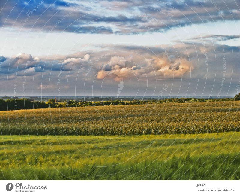 KommtDaEinGewitter? blau grün Landschaft Wolken grau rosa Wetter Korn Abenddämmerung Gewitter Kornfeld Gewitterwolken Gerste Abendsonne Gerstenfeld