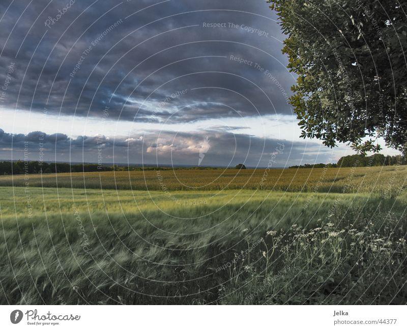 Kornfeld Baum Landschaft Wolken dunkel Feld Gewitterwolken Gerste Gerstenfeld