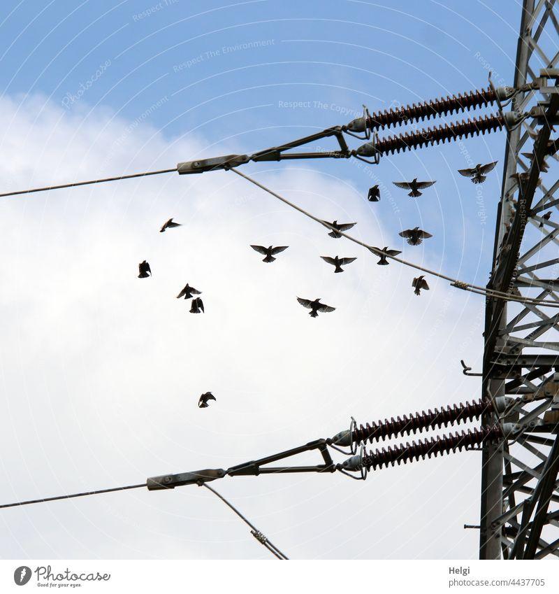 Tanz der Stare - Stare fliegen neben einem Strommast vor blauem Himmel mit Wolken Vogel Vogelzug Zugvogel viele Stromleitung Bewegung Dynamik Natur Herbst