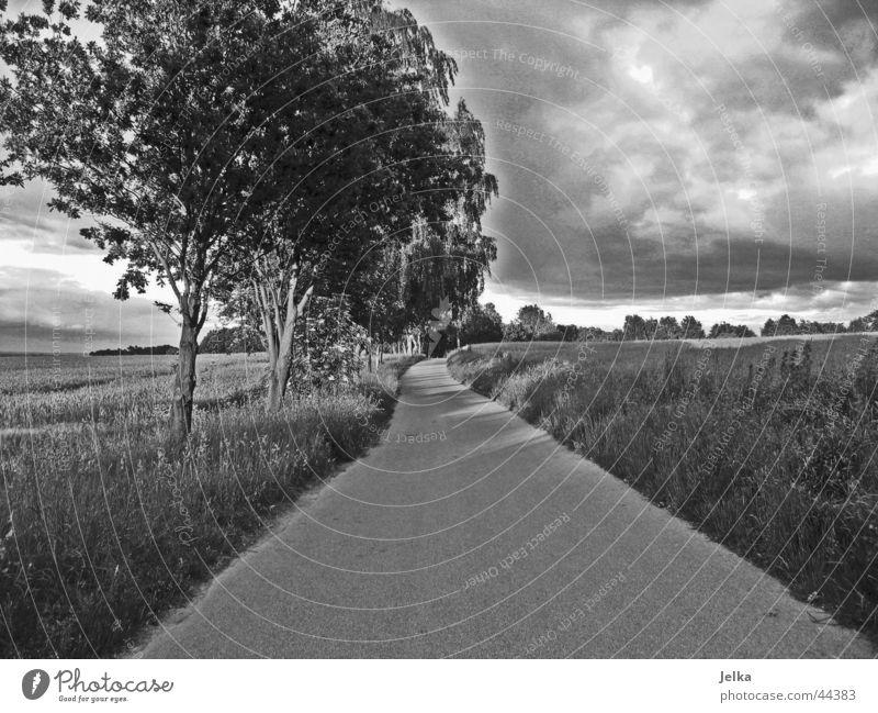 Der Weg zum Glück Baum Wolken Wald dunkel Straße Gras Wege & Pfade Feld Asphalt Korn Kornfeld Weizen Gewitterwolken Weizenfeld