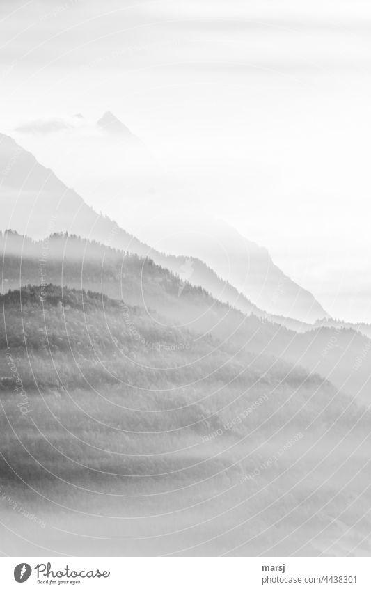 Dunstfelder vor den Bergen Berge u. Gebirge Gipfel ruhig Erholung Alpen Meditation Natur Landschaft Licht leuchten Freiheit harmonisch Morgen träumen Urelemente