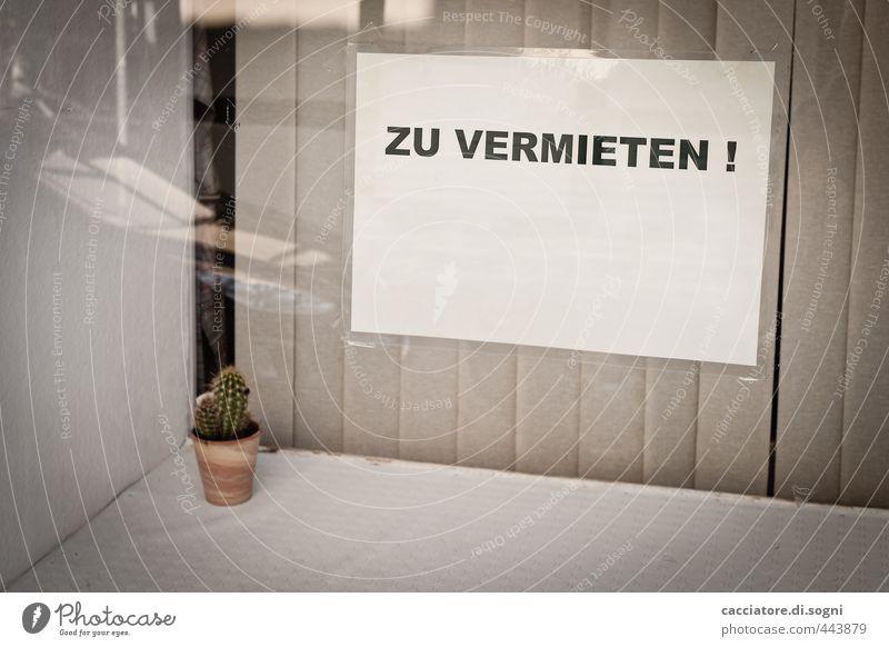 Kaktus - zu vermieten Dekoration & Verzierung Vertikaljalousie Topfpflanze Ladengeschäft Fenster Schaufenster Zettel Schilder & Markierungen Schriftzeichen
