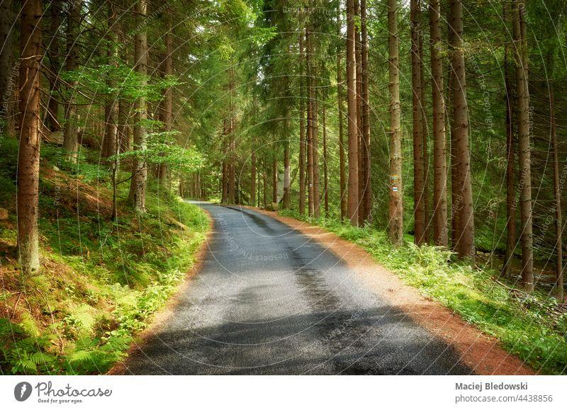 Nasse Asphaltstraße im Wald, Riesengebirge in der Region Liberec, Tschechische Republik. Berge Straße Natur reisen Ausflug Tschechien Baum Landschaft Europa