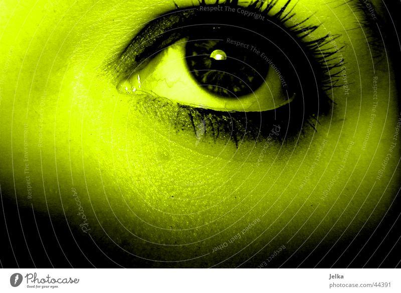 eye Frau grün Gesicht Erwachsene gelb Auge Wimpern Pupille grün-gelb