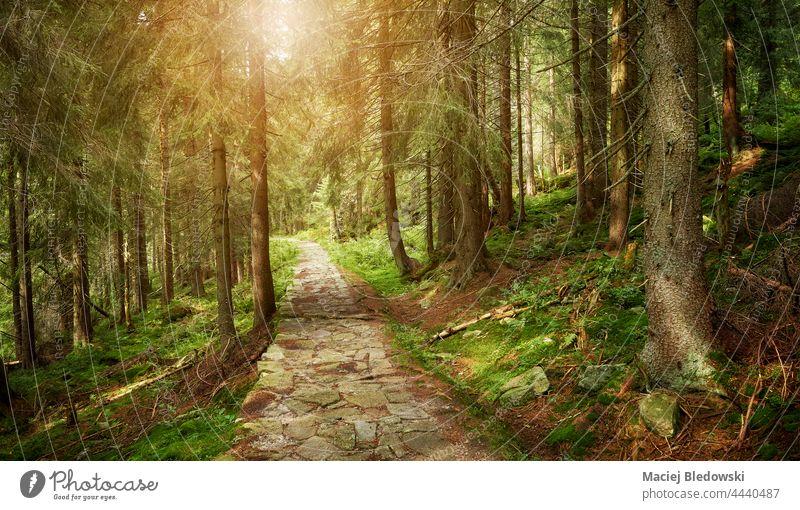 Waldsteinpfad im Riesengebirge, Tschechische Republik. Berge u. Gebirge Weg Nachlauf Fernweh Abenteuer Natur reisen schön Baum malerisch Landschaft Tschechien