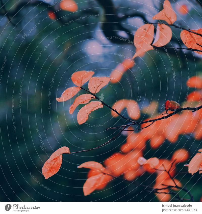 rote Baumblätter in der Natur in der Herbstzeit Niederlassungen Blätter Blatt natürlich Laubwerk texturiert im Freien Hintergrund Schönheit Zerbrechlichkeit